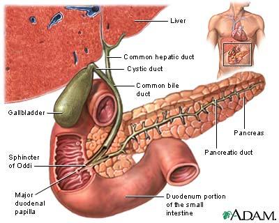 Gallbladder-picture-c