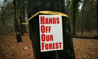 Protest-signs-adorn-a-tre-007