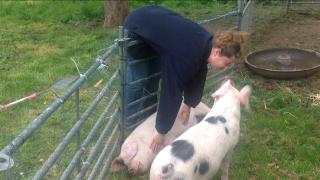 Pig kiss