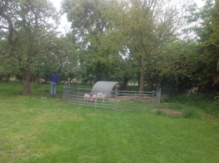 Piggy pen  in May